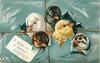 TO WISH YOU A HAPPY EASTER  five chicks breaking through bluish grey package, string tied