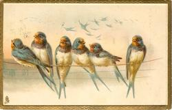 six swallows on a wire, many others distant