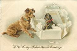 WITH LOVING CHRISTMAS GREETINGS  cat in a box that seems to have been opened by dog