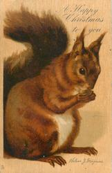 A HAPPY CHRISTMAS TO YOU  red squirrel