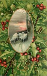 A HAPPY CHRISTMAS  holly around inset of four sheep on snowy road