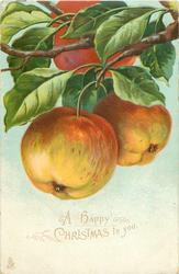 A HAPPY CHRISTMAS TO YOU  two apples hanging, another above touching top of card
