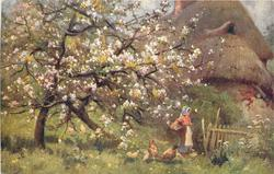 tree in white blossom, chickens front, woman with basket under her arm, farmhouse behind right