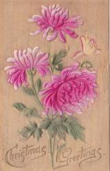 NEW YEAR GREETINGS chrystanthemums