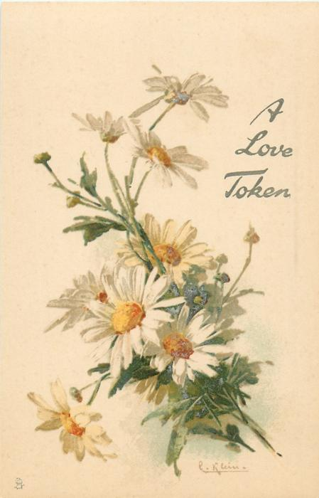 marguerites, yellow centres, white petals