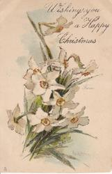 WISHING YOU A HAPPY CHRISTMAS FROM narcissi