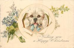 WISHING YOU A HAPPY CHRISTMAS  white dog with droopy ears, forget-me-nots