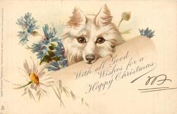 WITH ALL GOOD WISHES FOR A HAPPY CHRISTMAS  white dog with ears pointing up, cornflowers & daisy