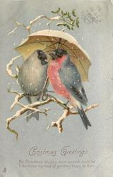 CHRISTMAS GREETINGS   two birds on twigs under white umbrella, silver background