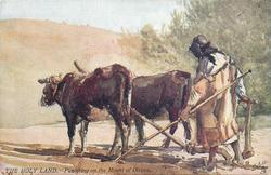 PLOUGHING ON THE MOUNT OF OLIVES