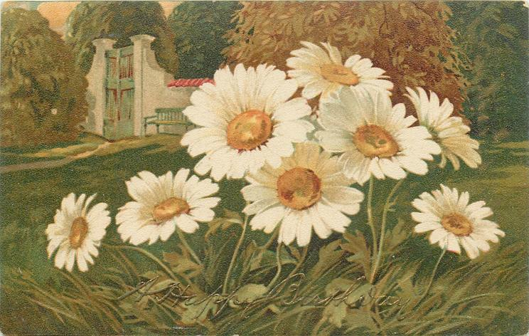 daisies front, bench next to gate behind