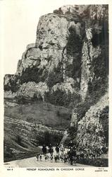 MENDIP FOXHOUNDS IN CHEDDAR GORGE