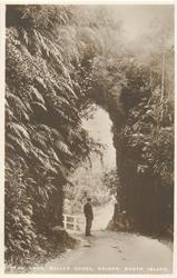 FERN ARCH, BULLER GORGE, NELSON, SOUTH ISLAND