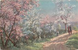 woman rides sidesaddle front, another walks on road, masses of blossom left & back