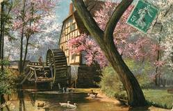 blossom trees around water-mill, ducks in front