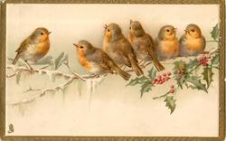 six robins on a snowy branch, holly right