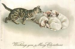 WISHING YOU A MERRY CHRISTMAS  cat approaches huddle of three puppies