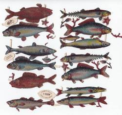 metallic fish