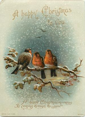 three robins on branch, two robins face front and one faces back