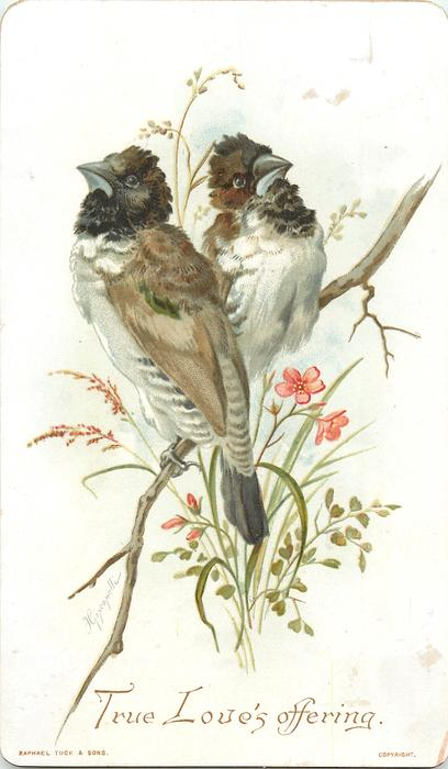 two brown and white birds sitting on a branch each looking different directions, red flowers underneath