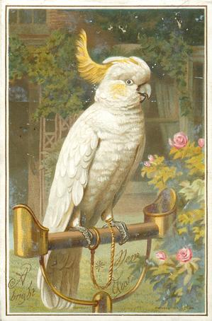 large white parrot on bird stand