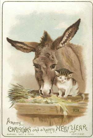 donkey and cat at manger look straight ahead