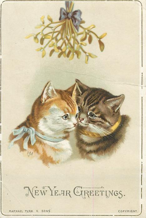 orange and white cat with blue ribbon beside two toned brown striped cat with gold collar