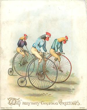 cockerels riding penny farthing  bicycles
