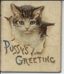 PUSSY'S GREETING