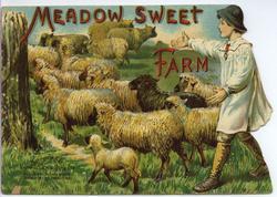 MEADOW SWEET FARM