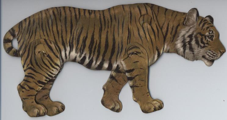 THE TIGER (FELIS TIGRIS)