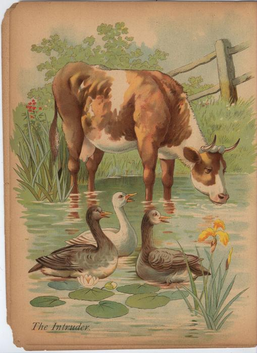 FARMYARD PICTURES PAINTING BOOK