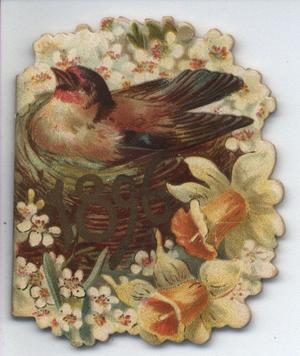 1896 bird in nest