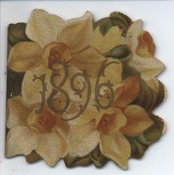 1896 yellow daffodils