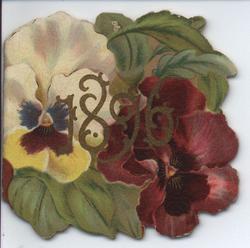 1896 pansies