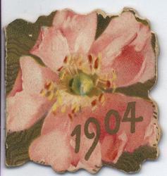 1904 pink flower