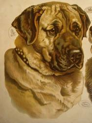 dog heads ,Bull Mastiff and St. Bernard