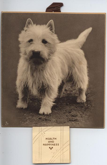"""HER VOICE"" (WEST HIGHLAND WHITE TERRIER)"