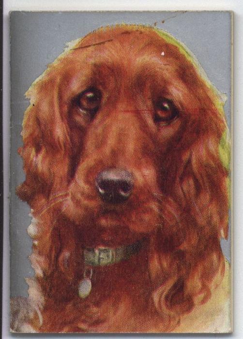 head of brown dog wearing green collar
