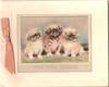 THE WEE THREE inset, three seated Pekinese dogs look front, inside WITH BEST WISHES FOR A HAPPY BIRTHDAY