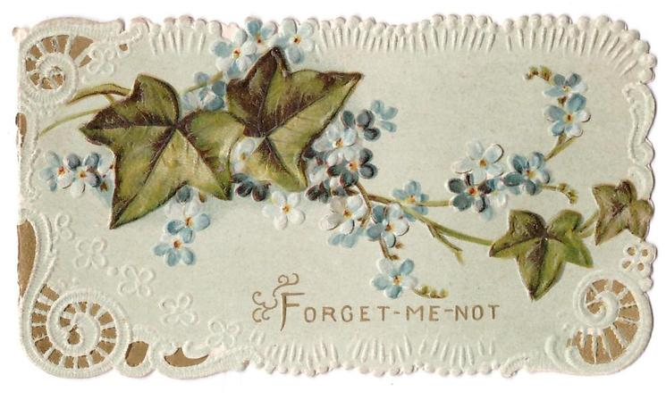 FORGET-ME- NOT, ivy leaves intertwined with forget-me-nots