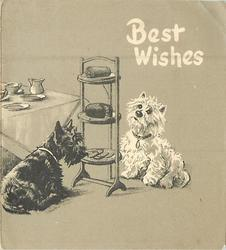 BEST WISHES two terriers sit near cake stand