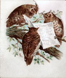 no front title, three owls pearch reading a newspaper, inside A  HAPPY NEW YEAR