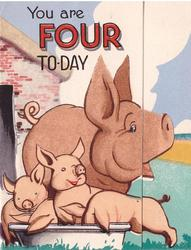 YOU ARE FOUR TO-DAY sow and piglets