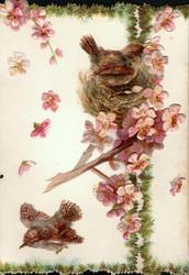 no front title 2 brown wrens, one flying, one on nest inset among pink blossom, ribbons of green foliage at borders A HAPPY CHRISTMAS TO YOU inside