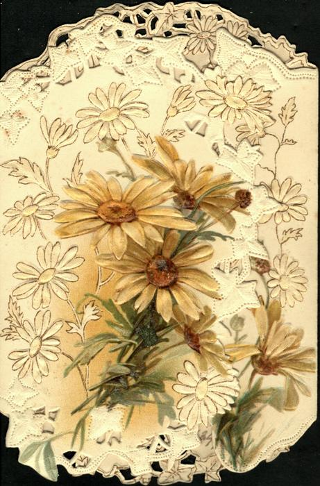 no front title, yellow daisies vertically on both flaps, surrounded by stylised white daisies,