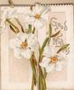 GOOD WISHES right, four narcissi & leaves on both panels