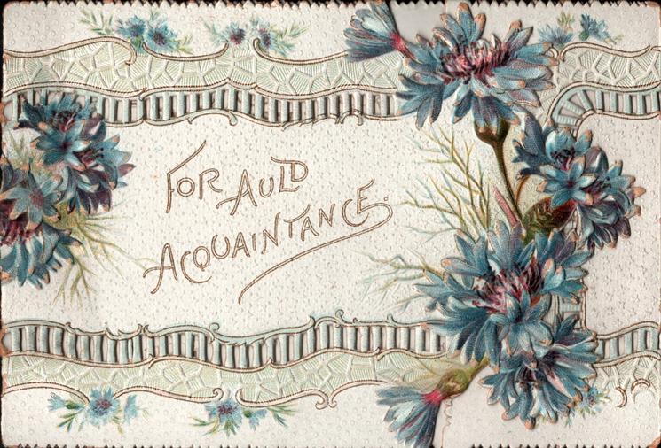 FOR AULD ACQUAINTANCE, blue cornflowers around