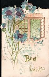 BEST WISHES  below right, blue cornflowers left of open window & three blue-birds,