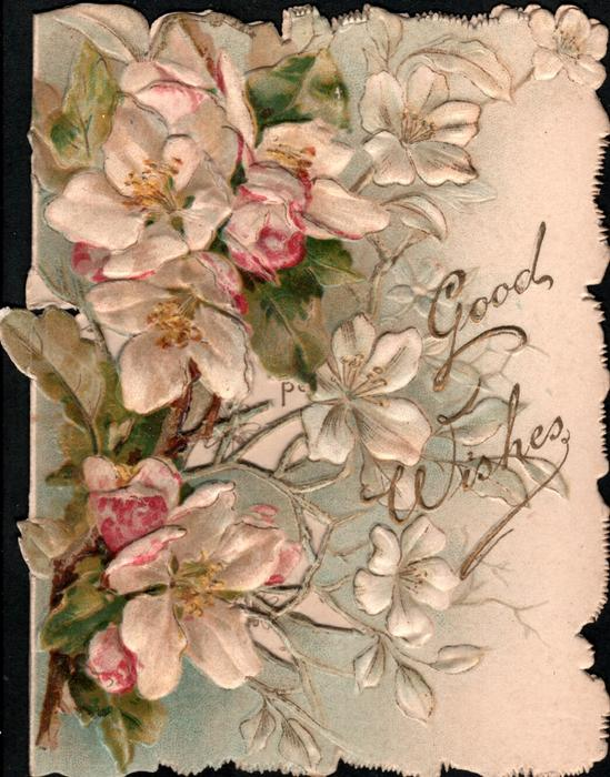 GOOD WISHES in gilt to right of pink & white wild roses